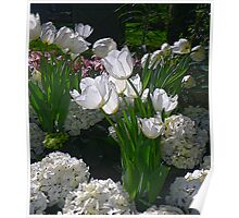 White Tulips in the Conservatory Poster