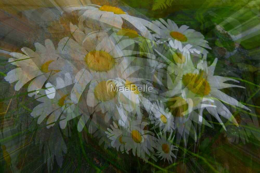 Daisy Rays by MaeBelle