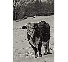 I Am Not A Happy Cow Photographic Print