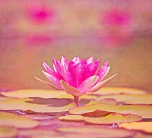 Pretty in Pink by Pamela Holdsworth