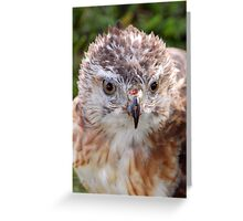 Red-Tail Greeting Card