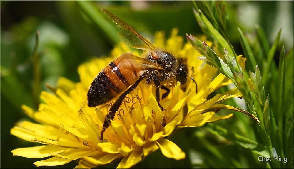 Dande Bee by Chet  King