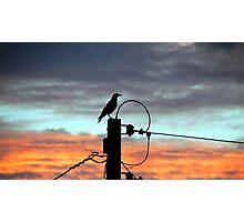 Bird on a Pole Photographic Print