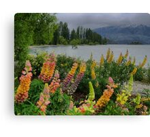 Lupin Colour at the Wanaka Tree ( 3 Canvas Print