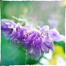 Lavender Light by KBritt