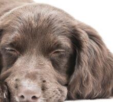 Let Sleeping Dogs Lie Sticker