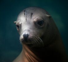 Sea Lion Portrait by Daisy Yeung