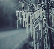Icicles ii by Citizen