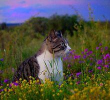 Feline florals by Penny Kittel
