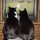 What the Cats do When You're Gone by BarbL