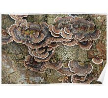 Turkey Tails Poster