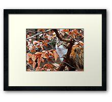 Cat Exploring the Winter Woods II Framed Print