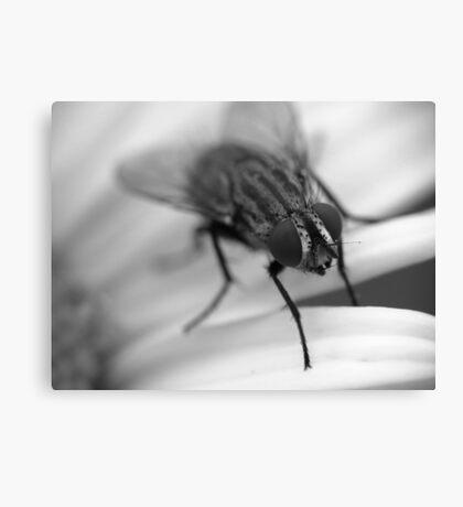 Fly 1 B&W Canvas Print