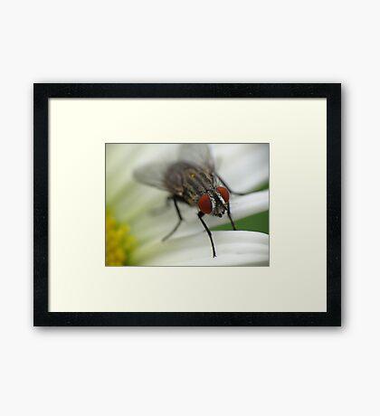 Fly 1 Framed Print
