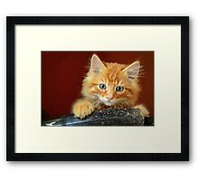 Ginger Kitten Framed Print