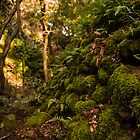 Enchanted Forest by Stephen Cullum