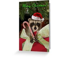 Christmas Raccoon Greeting Card