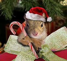 Christmas Squirrel by jkartlife
