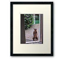 Neighborhood Flasher Framed Print