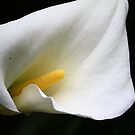White Lily  by Carrie Bonham