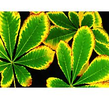 Neon Green Leaves Photographic Print
