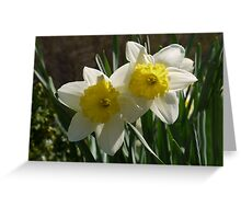 Daffodil Pair Greeting Card