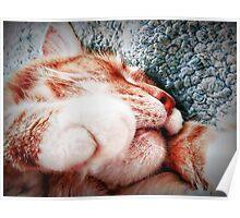 Sleepy Kitty, Happy Kitty Poster