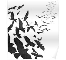 Flock of Birds in Flight Poster