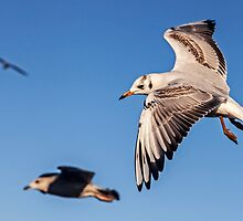Flying High by David Patterson