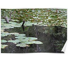 Lily Pads on the Dam Poster