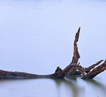 Rainy Day Driftwood by Otto Danby II