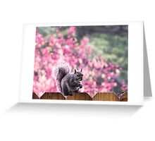 You Cannot Have My NUT!! Greeting Card