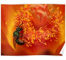 Green Sweat Bee Poster