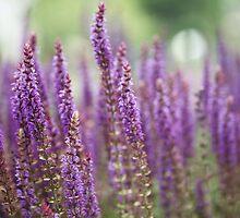 Field of Purple Flowers by Megan Schatzman
