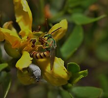 Sweat Bee & Company on Chaparral by InnerSees