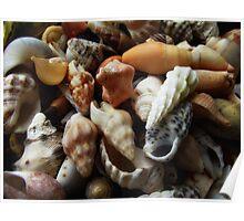 Sea Gems Poster