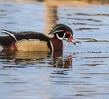 Wood Duck Drake by John Williams
