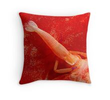 Shrimp on Spanish Dancer Lord Howe Island Australia Throw Pillow