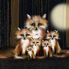 Fox Family by © Karin (Cassidy) Taylor