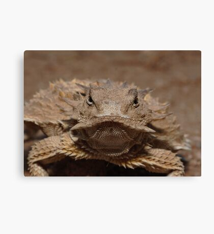 Tough Old Broad Canvas Print