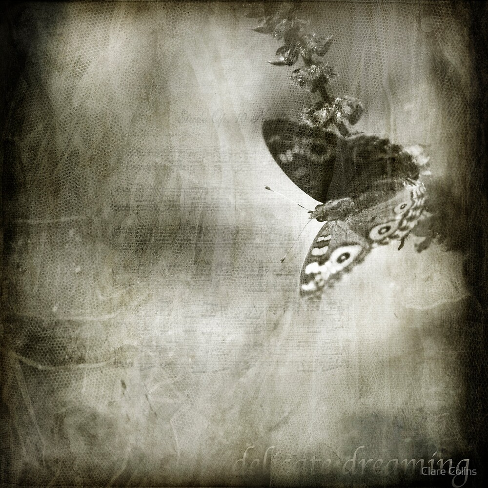 Delicate Dreaming by Clare Colins