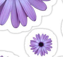 Purple Daisy - aqua background Sticker