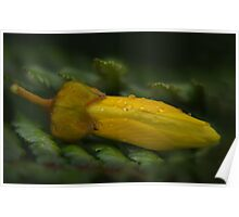 Kowhai Bed Poster