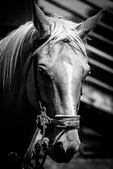 Horse by srhayward