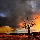 Storm by Barry Feldman
