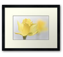 Bashful blooming... Framed Print