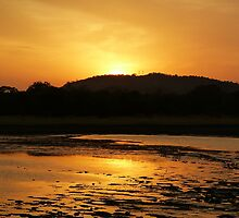 Sunset at Minneriya National Park Sri Lanka by Inez Wijker