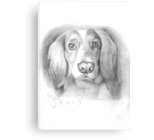 Cocker Spaniel Canvas Print