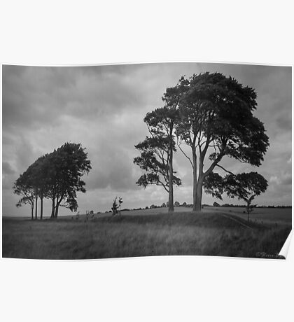Windswept Trees Poster