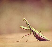 Praying Mantis - Queen of the Garden by Renee Dawson